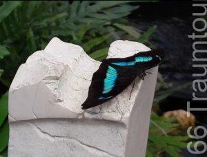 Schmetterling in der Orchideenwelt